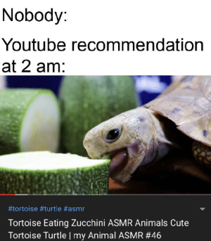 ...oc...: Nobody:  Youtube recommendation  at 2 am:  #tortoise #turtle #asmr  Tortoise Eating Zucchini ASMR Anima ls Cute  Tortoise Turtle | my Animal ASMR # 46 ...oc...