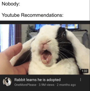 youtube.com, Rabbit, and For: Nobody:  Youtube Recommendations:  1:32  Rabbit learns he is adopted  OneMorePlease 3.9M views 2 months ago F for this rabbit though