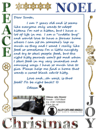"""Poor Odessa has been waiting a very, very long time for a forever home.: NOEL  Dear Santa  I am 7 years old and it seems  only wants to adopt  like everyone  not a kitten, brut I have a  in me I ann a """"cuddle bug  lot of Life  and would love to have a forever home  where I can sit on someones lap as  much as they and I want I really like  food so sometimes  m a little naughty  and try to steal people food, but the  right kitty parents won't get mad when  I steal food in my very inventive and  amusing ways I have so much love to  gives Please help  me find a home that  wants a sweet black adult kitty  Love and....oh wait is that  food? be right back  Odessa  (aka Dessie)  Est. DOB 11/29/2009  A true lap cat  ALLEYCATS AND ANGELS  OF NORTH CAROLINA  Christmas Y Poor Odessa has been waiting a very, very long time for a forever home."""