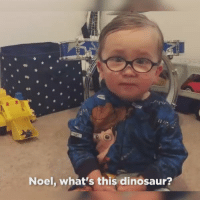 Dinosaur, Love, and Omg: Noel, what's this dinosaur? OMG I JUST WANNA LOVE HIM WITH ALL MY HEART 😭😭 https://t.co/NsE1JAY74S