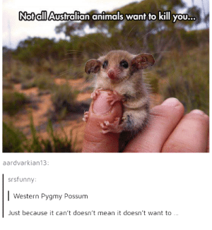 Dont trust it: Nofall Australian animals wanf to kill yoOU...  aardvarkian13:  srsfunny  Western Pygmy Possum  ust because it can't doesn't mean it doesn't want to Dont trust it