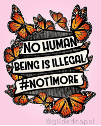 No human being in this world is illegal! ✊🏾✊🏽 HereToStay not1more defendthesacred migrationisbeautiful: NOHUMA  BEING IS ILLEGAL  ENOTIMORE  gildedn opal No human being in this world is illegal! ✊🏾✊🏽 HereToStay not1more defendthesacred migrationisbeautiful
