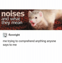 Fucking, Love, and Memes: nOISeS  and what  they mean  me trying to comprehend anything anyone  says to me i fucking love ferrets so much and i miss Aragon i cri i wanna go back home tbh but i didnt get to see leccs because she fell asleep while watching her siblings 😤😤