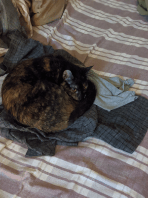 NOLA protecting my work clothes with her life: NOLA protecting my work clothes with her life