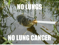 NOLUNGS  NO LUNG CANCER You win this round Mr. Fish