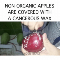 Beer, Facebook, and Family: NON-ORGANIC APPLES  ARE COVERED WITH  A CANCEROUS WAX  a HOLISTICALI Follow ➡️ @holisticali 🔴Read Caption to know the difference between Organic and Conventional Waxes🔴 Ethanol can also be used in conventional fruit wax. Ethanol is an alcohol produced by yeast from sugars. It's the same ethanol that is used in beer production. And in the US it is mainly derived from corn. Archer Daniels Midland Co. is one of the world's leading producers of ethyl alcohol. They derive it from conventional corn (likely GMO, too). Conventional fruit wax sprays also contain preservatives, and fungicides. They can sometimes contain dyes, too. Conventional wax coatings are not digested by the body. But the chemicals in the wax can be absorbed by the body. Source:http:-healthy-family.org-fruit-wax-ingredients-revealed- 'Organically grown fruits and vegetables do not contain synthetic (petroleum-based) wax coatings. However, certain waxes are permitted in the handling of certified organic fruits and vegetables including shellac (from the lac beetle) and carnauba wax (from carnauba palm).' (SOURCE: http:-www.whfoods.com-genpage.php?tname=george&dbid=175) •••••••••••••••••••••••••••••••••••••••••••••• How to Remove Pesticides from Fruits and Vegetables Fill a large bowl with 4 parts water to 1 part plain white vinegar. Soak the fruit or vegetables you'd like to clean in the mixture for 20 minutes. Rinse the fruit or vegetables well with water •••••••••••••••••••••••••••••••••••••••••••••• GoOrganic Wax Apples HolisticAli IG 👉🏽 @realrawtruth FACEBOOK-YOUTUBE-SNAPCHAT 👉🏽 @holisticali SUBSCRIBE TO NEW YOUTUBE LINK IN BIO