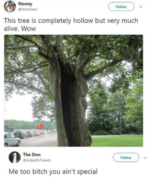 This tree gets it: Nonny  Follow  @Nonsibear  This tree is completely hollow but very much  alive. Wow  The Don  Follow  @JackedYoTweets  Me too bitch you ain't special This tree gets it