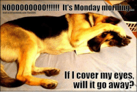 NOO0000000!!!!! It's Monday morning  visit us at facebook.com/TheGSDC  Ifl cover my eyes,  will it go away? That Monday morning feeling :P  https://buff.ly/2v5y44J