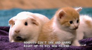 Tumblr, Blog, and Good: NOODLES ISN' T SHY AND WARMS  RIGHT UP TO HIS NEW FRIEND toopunktofuck:  cumwitch:   toopunktofuck:  #WHICH ONE IS NOODLES#???!!!    VERY GOOD