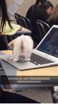 weloveshortvideos:  he peed on the laptop : NOOOO HE JUST PEEEEEEDDDDD  HAHAHAHAHAHAH weloveshortvideos:  he peed on the laptop