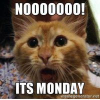 #Monday! #Mew: NOOOOOOO!  ITS MONDAY  memegenerator not #Monday! #Mew