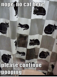 Please Continue: nope no cat here  please continue  pooping