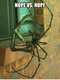 Meanwhile, in Australia: NOPE VS, NOPE Meanwhile, in Australia