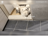 9gag, Cute, and Memes: noridongsan IG  taph That brave friend who loves running into danger By @noridongsan pom dog cute 9gag