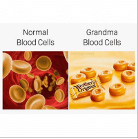 Candy, Grandma, and Meme: Normal  Blood Cells  Grandma  Blood Cells  meme gourmet  her @memegourmet pops out visual wizardry like candy. Check out @memegourmet and then visit your dentist immediately. (RP @memegourmet 🐸) 🙌🏼