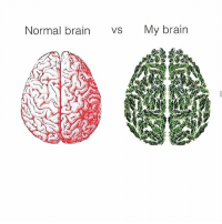 Brain: Normal brain vs My brain