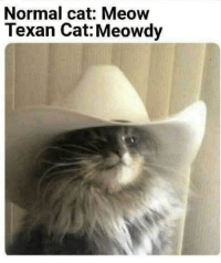 Before you scroll, consider the following: Normal cat: Meow  Texan Cat: Meowdy Before you scroll, consider the following