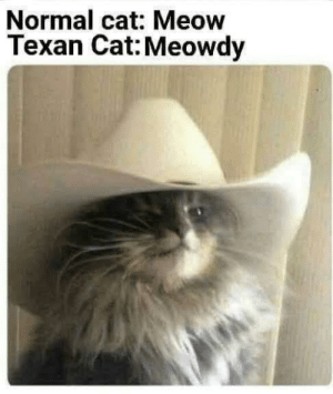 Before you scroll, consider the following by lion_OBrian MORE MEMES: Normal cat: Meow  Texan Cat: Meowdy Before you scroll, consider the following by lion_OBrian MORE MEMES