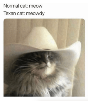 justcatposts:Meowdy pawtner: Normal cat: meow  Texan cat: meowdy justcatposts:Meowdy pawtner