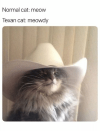 Meowdy indeed.: Normal cat: meow  Texan cat: meowdy Meowdy indeed.