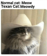 Well hello there: Normal cat: Meow  Texan Cat: Meowdy Well hello there