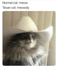 cat: Normal cat: meow  Texan cat: meowdy