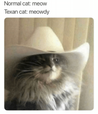 You can find this cat sitting on the outside porch with a tooth pick in its mouth smoking a cigar memesapp: Normal cat: meow  Texan cat: meowdy You can find this cat sitting on the outside porch with a tooth pick in its mouth smoking a cigar memesapp