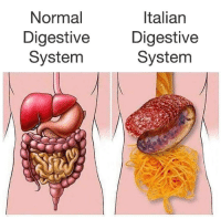 Dank Memes, Italian, and Digestive System: Normal  Digestive  System  Italian  Digestive  System