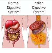 Love, Memes, and Best: Normal  Digestive  System  Italian  Digestive  System I love geometry | 👉 @sean_speezy has the best memes