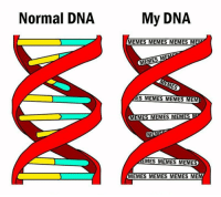 Memes, New Year's, and 🤖: Normal DNA  My DNA  MEMES MEMES MEMES M  MEMES MEMES MEM  EMES MEMES MEMES  EMES  MEM  MES MEMES MEMES  MEMES MEMES MEMES MEM New year same me