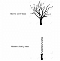 Family, Memes, and Alabama: Normal family trees  Alabama family trees ROLL TIDE!!!