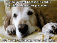 ;): norrmanack@flickr  Giving up a pet because it's old is  setting a dangerous precedent.  re not getting any younger  either ;)