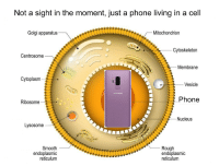 Phone, Smooth, and Nature: Not a sight in the moment, just a phone living in a cell  Golgi apparatus  Mitochondrion  Cytoskeletorn  Centrosome-  Membrane  Cytoplasm  esicle  Phone  Ribosome  Nucleus  Lysosome  Smooth  endoplasmic  reticulum  -Rough  endoplasmic  reticulum