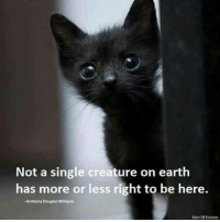 douglas williams: Not a single creature on earth  has more or less right to be here.  Anthony Douglas Williams  Stirr Of Echoes