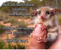 Animals, Memes, and Australian: Not all Australian  animals  Killl you  Don't get me wrong,  He wants to...  He just can't. Little did you know via /r/memes https://ift.tt/2U6xo9t