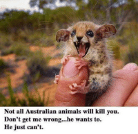 Animals, Death, and Fear: Not all Australian animals will kill you  Don't get me wrong...he wants to.  He just can't. Fear me for I will kill you all! No stop petting me for I am death!