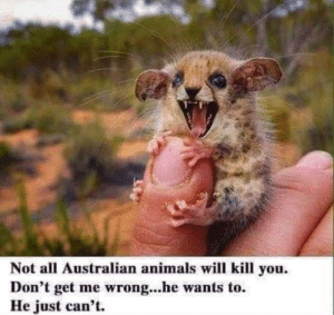 Animals, Memes, and Australian: Not all Australian animals will kill you.  Don't get me wrong...he wants to.  He just can't.