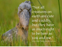 """douglas williams: Not all  creatures on  earth are cute  and cuddly,  but they have  as much right  to be here as  you and me.""""  Anthony Douglas Williams Inside the Divine Pattern"""