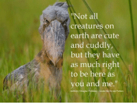 """douglas williams: """"Not all  creatures on  earth are cute  and cuddly,  but they have  as much right  to be here as  you and me.""""  Anthony Douglas Williams-Inside the Divine Pattern"""