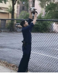 Memes, Police, and Worldstar: Not all heroes wear capes: Police officer frees stuck opossum in the Bronx 🙌😂💯 (Via @ __theloopyblogger__) @worldstar WSHH