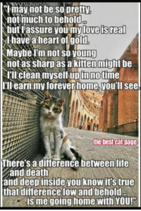 Memes, Poems, and Best Cat: not be so pretty,  not much to behold  but assure you my lovelis real  l have a heart of gold  Maybe Im not SO young  not as sharp as a kitten might be  NIII clean myself pin notime  up I'll earn my forever home,you'll see!  the best cat Dage  There's a difference between life  and death  and deep inside you know it's true  that difference lowland behold  is me going home with YOU! Poem