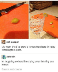 Ass, Crying, and Tree: not-cooper  My mom tried to grow a lemon tree here in rainy  Washington state  xekstrin  im laughing so hard im crying over this tiny ass  lemon  Source: not-cooper