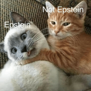 Cat got your tongue: Not Epstein  Epstein Cat got your tongue