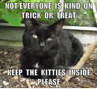 Halloween, Memes, and 🤖: NOT EV  TRICIK OR TREAT  KEEP THE KITTLES INSIDE  PLEASE HALLOWEEN IS COMING ~ KEEP THEM INDOORS + SAFE! =^..^=