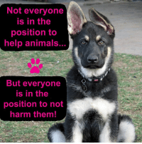 Animals, Memes, and Help: Not everyone  is in the  position to  help animals  ..  But everyone  is in the  position to not  harm them! 🐾