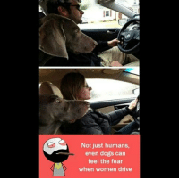 Be Like, Dogs, and Meme: Not just humans,  even dogs can  feel the fear  when women drive Twitter: BLB247 Snapchat : BELIKEBRO.COM belikebro sarcasm meme Follow @be.like.bro