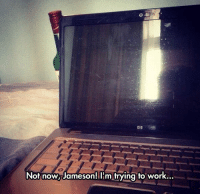 Tumblr, Work, and Blog: Not now, Jameson! lIm trying to work srsfunny:Stop It, Jameson