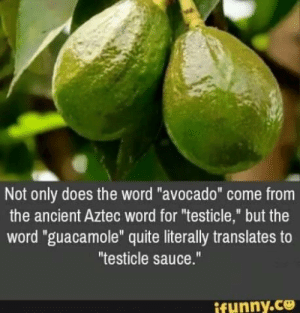".: Not only does the word ""avocado"" come from  the ancient Aztec word for ""testicle,"" but the  word ""guacamole"" quite literally translates to  ""testicle sauce.""  ifynny.co ."