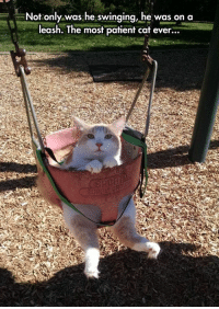 Tumblr, Blog, and Http: -,--Not only was he swinging, he was on a  leash. The most patient cat ever... srsfunny:What A Sweet Face And Look At Those Furry Toes