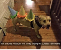 Drunk, Jurassic Park, and Memes: Not pictured: my drunk wife loudly singing the Jurassic Park theme Welcome to... Doggosaurus Park . . . . . marriagegoals goodboy . . . 👉 Snapchat : TheSlothYodeler 👈
